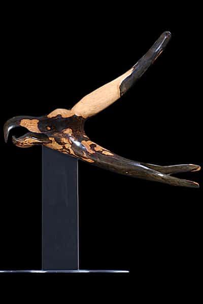 Hawk by Nader G. Vakili
