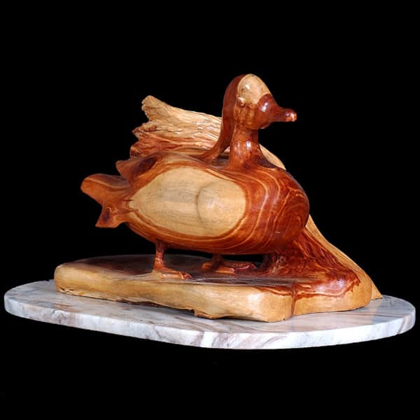 Wood Duck by Nader G. Vakili